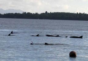 060 Delfine und Schnorchler